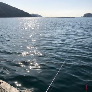 初めて太刀魚釣りました