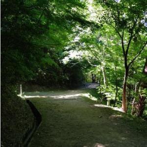 オヤジの森林浴