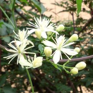 花の少ない時季の花💠