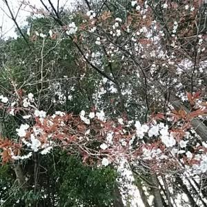 平山北舟/朝日ジャーナル捨つ春泥をつけしまま