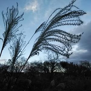 五十嵐秀彦/古里の母音の空の花芒