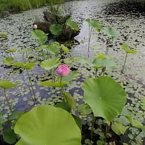 大河原真青/ガムランを遠く水場の黒揚羽