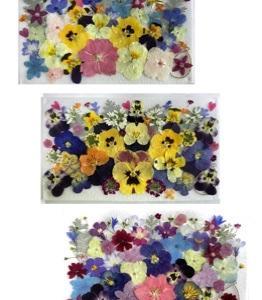 押し花の花パック!