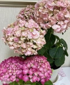 お花屋さんで可愛いお花を~