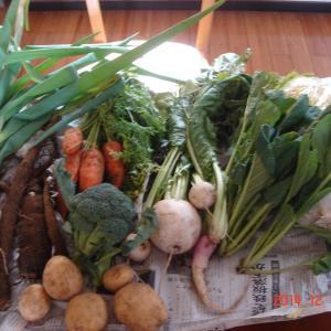 今週の野菜きた