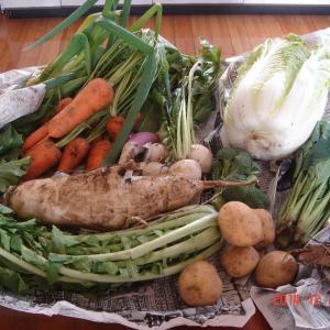 今週の野菜とハトムギ