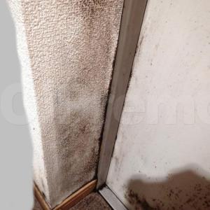 玄関ドア脇の壁紙はカビてませんか?