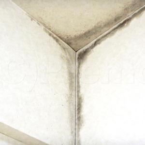 マンション北側洋室の壁紙はカビてませんか?
