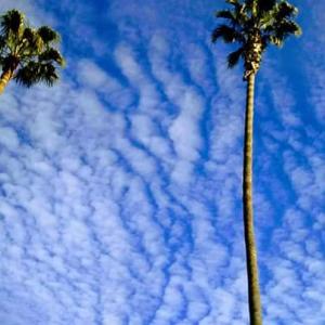 【2020年2月中旬~3月下旬まで】~カリフォルニア・サンディエゴを拠点に活動します~-