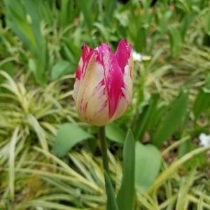 ◆春らしく