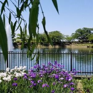 ◆久し振りの公園