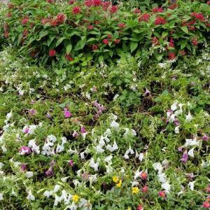 ◆駅前の花壇