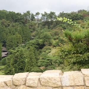 ◆六甲枝垂れから見える風景
