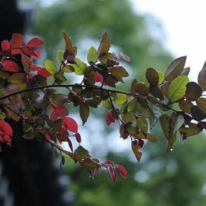 ◆紫陽花より 木々が美しくって