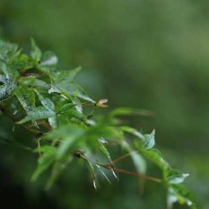 ◆グリーンが綺麗