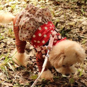 【秋のお散歩~】 ◎可愛がってくれる人探しは、相変わらず~♪