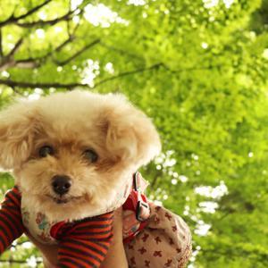 【平日の午前中お散歩~】 ◎楽しいお顔をしてくれる、くーちゃんです~♪