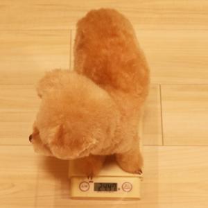 【誤差なし! その結果は?】 ◎くーちゃんの体重を1グラム単位で測定した方法を紹介~♪