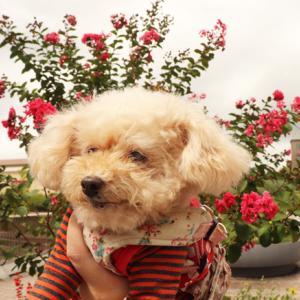 【赤い花をバックに・・・】 ◎くーちゃんは、可愛がられる気満々~♪