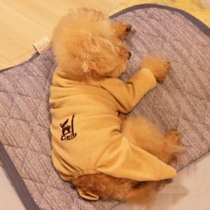 【引っかき傷の防止に!】 ◎タンスの奥で眠っていた、ロンパース着用作戦~♪