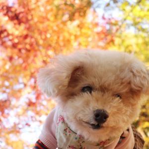 【芸術の秋~♪】 ◎くーちゃんで芸術的な写真を撮る方法は・・・?