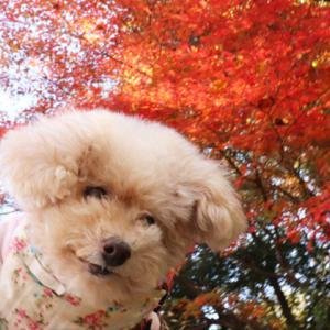 【今年は見納め~】 ◎いつものお散歩道での紅葉写真~♪