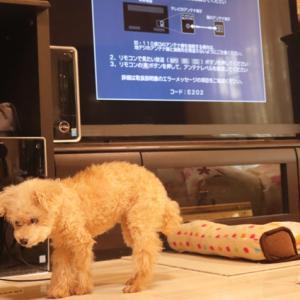 【厄日?】◎炊飯器が壊れ、ネットとテレビがつながらなくなった日~