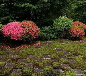 苔庭にサツキが咲くを見る @東福寺本坊庭園(旧方丈)