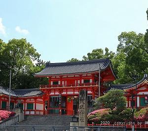 八坂神社にサツキが咲くを見る