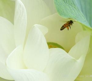 花粉団子と蓮を見る