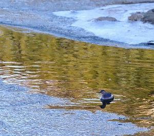 極寒の鴨川パトロール