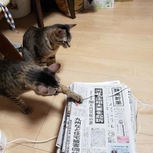 猫が手を貸す?