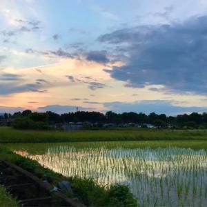 風景 @あきる野