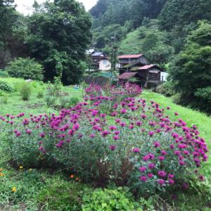 梅雨時に咲く山の花 @あきる野