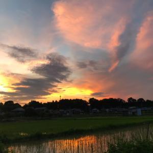夏の風景。 @あきる野