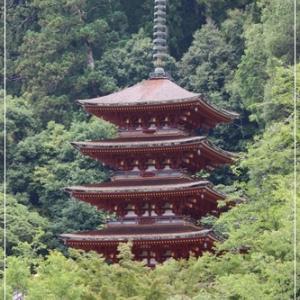 ♪奈良、長谷寺のアジサイ花♪
