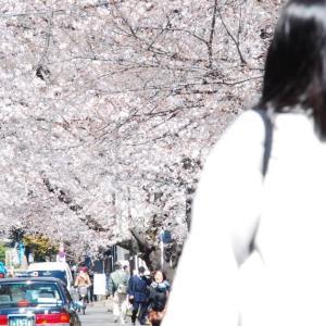 Japanese TATTOO Horimitsu 2020 spring Sakura season