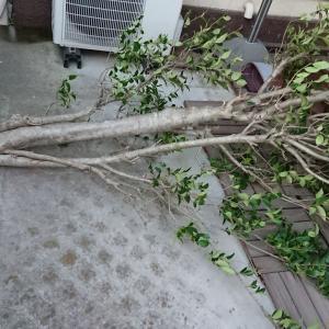 台風15号・眠れぬ夜