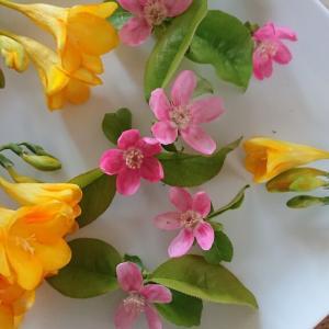 お庭の花「花梨&フリージア」
