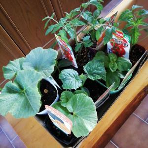 家庭菜園☆2021年夏に向けて・・・