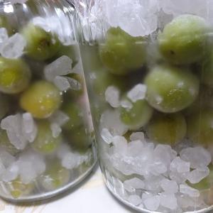梅シロップ作り☆梅を冷凍☆