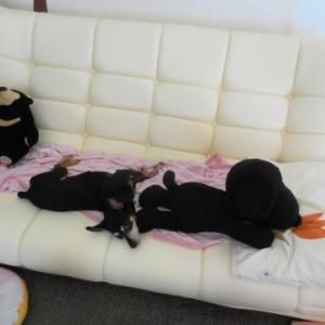 私もソファーに座りたい。