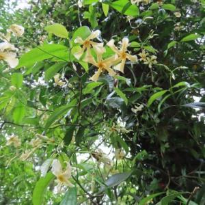 低山で見かけた植物・タツナミソウ、アカショウマ、ハナミョウガなど