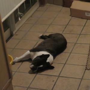 きのうは玄関のところで寝ました~
