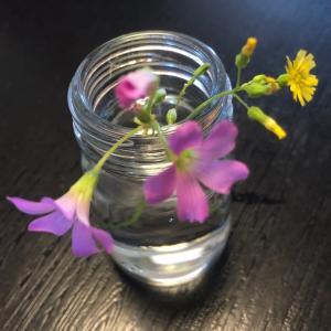 雑草に花が咲いて可愛いから摘んでみた