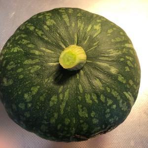 収穫したてのかぼちゃ