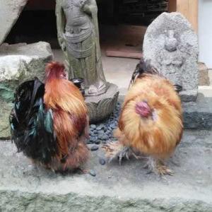 七沢観音、インコ寺