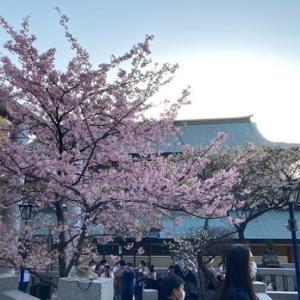 ★上野公園散歩♪2月の桜★