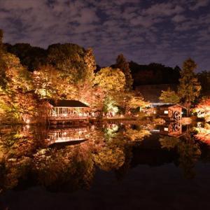 東山植物園 ライトアップ