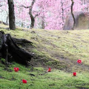 城南宮の梅